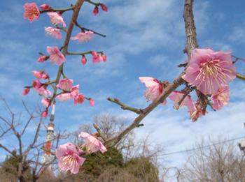 増上寺2-20140208.jpg