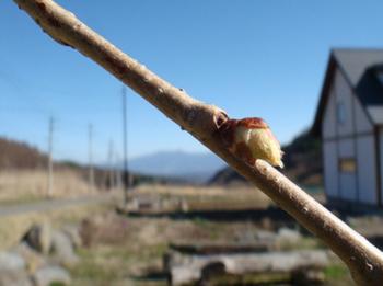 桜20130408.jpg