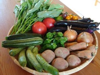 野菜セット8月20110807.JPG