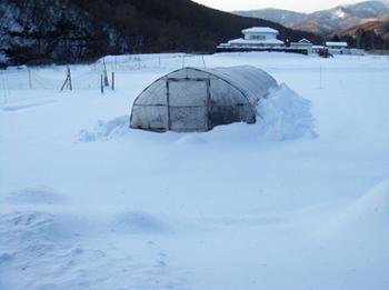 雪20140210.jpg