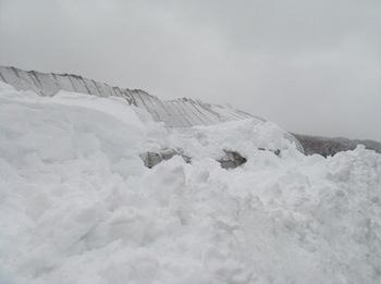 雪3/20140215.jpg